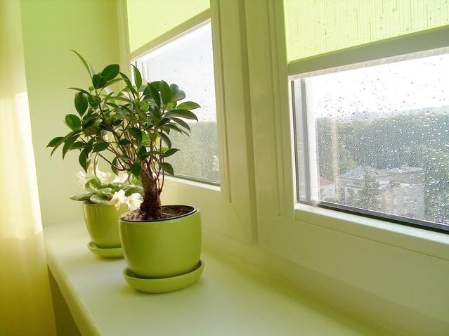 Plastové okná, kvetináče, dážď